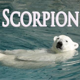 Scorpion Décembre 2020