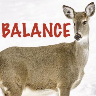 Balance 2021 1ère partie