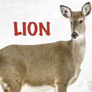 LION 2021 1ère partie