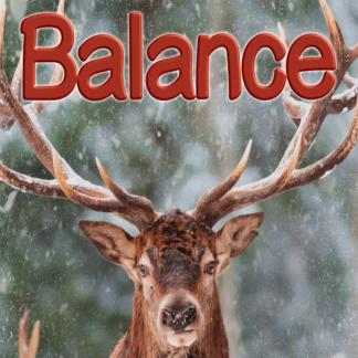 Balance février 2021